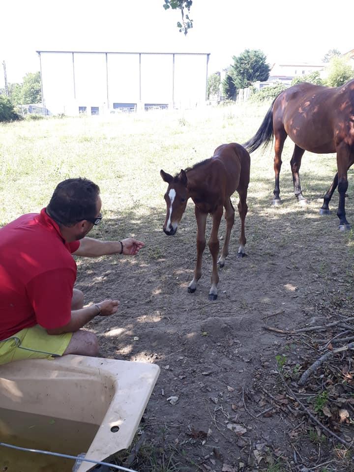 dominique gaudin élevage quintillière