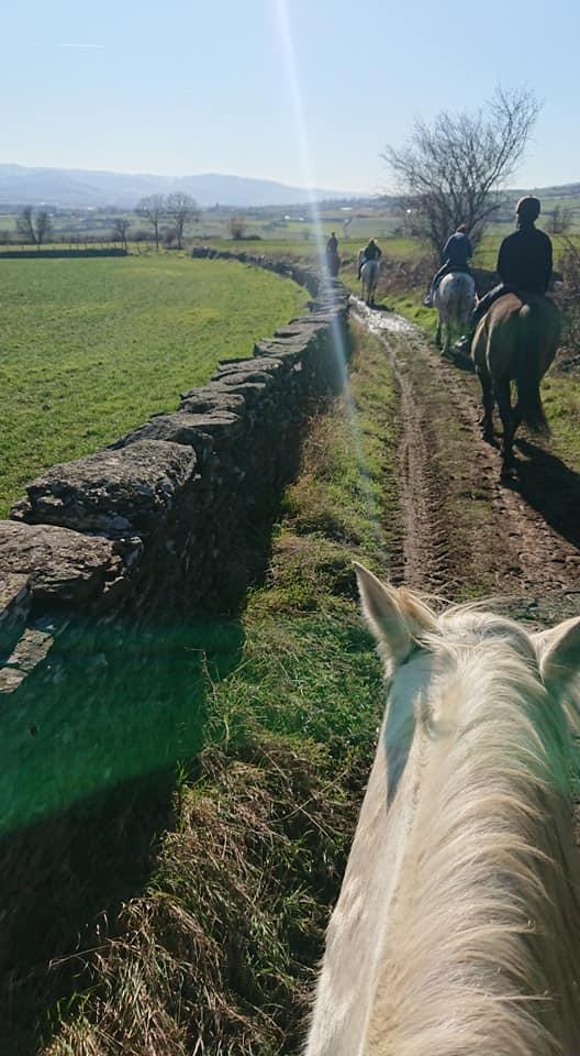 pension équitation d'extérieur