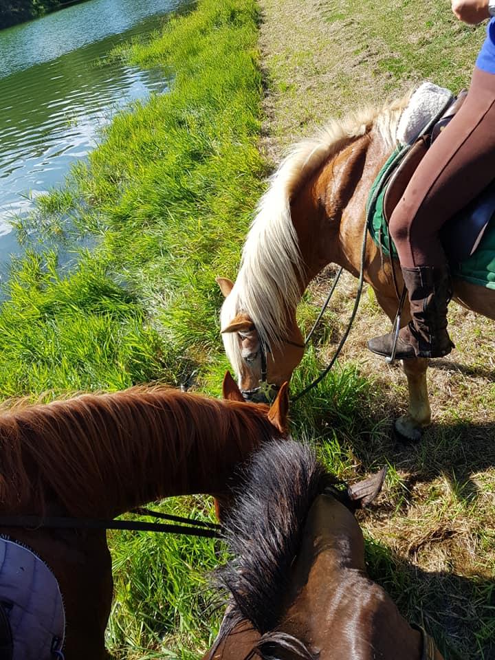 Randonnée cheval mer