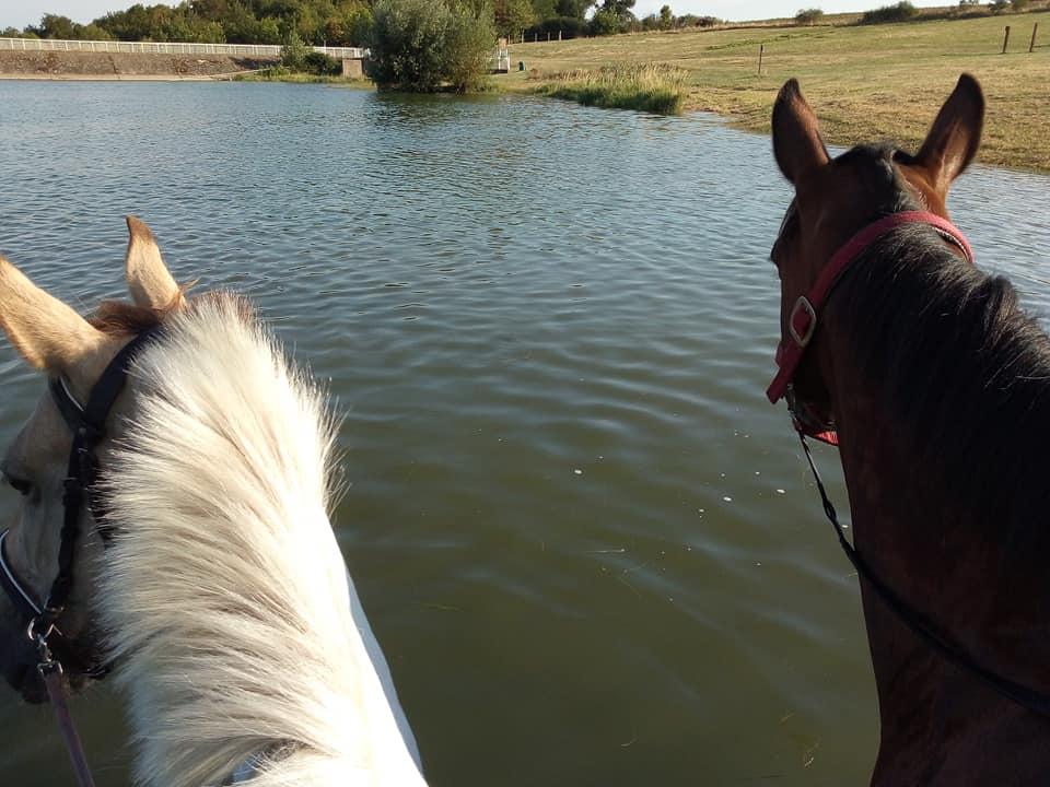 randonnée cheval lac madone quintillière