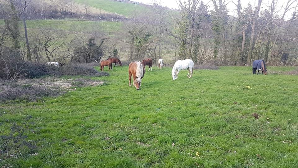 pension_pre_chevaux