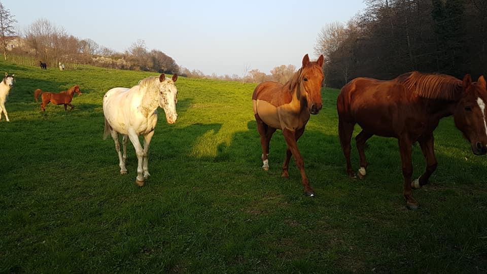 pension_pre_cheval_ouest_lyonnais